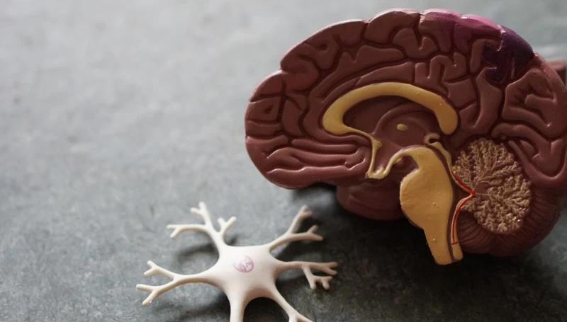 cervello perdita di memoria