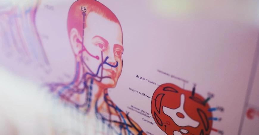 corpo sistema immunitario lisozima
