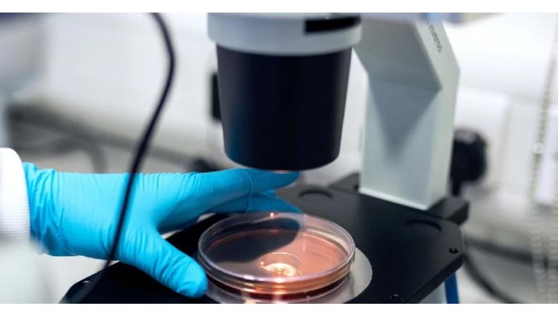 Lisozima e Sistema Immunitario